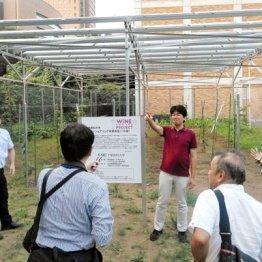農地再生にもなる「ソーラーシェアリング」をやってみよう