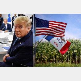 「シンゾー、買ってくれるな」(トランプ米大統領)、しかし米国産トウモロコシの大半が遺伝子組み換え(C)ロイター