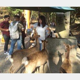 鹿がレジ袋の被害に(提供写真)