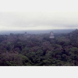 グアテマラのティカル遺跡。ジャングルの大海原からピラミッドの先端がそこかしこに…(提供写真)