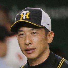 「4番大山」育成より目先の勝利を選ぶ虎・矢野監督の滑稽