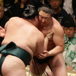 大相撲 人気力士丸わかり名鑑 日刊ゲンダイDIGITAL