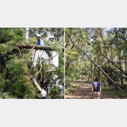 倒木で復旧作業は難航(C)共同通信社
