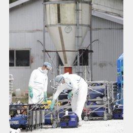 豚コレラが発生した岐阜県恵那市の養豚場で、防疫作業の準備を進める作業員(C)共同通信社