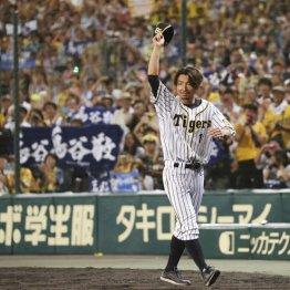 阪神CS出場も鳥谷は…寂しい終幕に球団と指揮官への不信感