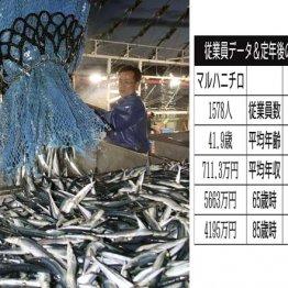 サンマの秋に…水産大手2社マルハニチロと日本水産を比較