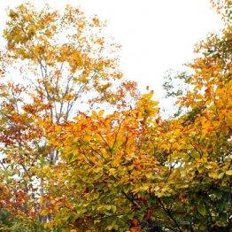 紅葉シーズン突入 筑波や箱根を「お得きっぷ」で巡る旅
