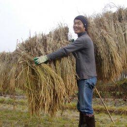 「ヒノヒカリ」を1反の田んぼで育て自然乾燥しています