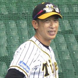 阪神・矢野体制2年目突入…早くも燻り始めた「3つの火種」