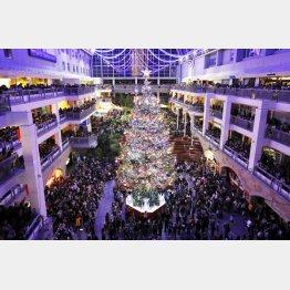 札幌市の大型商業施設「サッポロファクトリー」で点灯された巨大クリスマスツリー(C)共同通信社