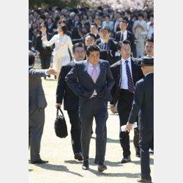走り回って招待客に挨拶する安倍首相(2019年「桜を見る会」)/(C)日刊ゲンダイ