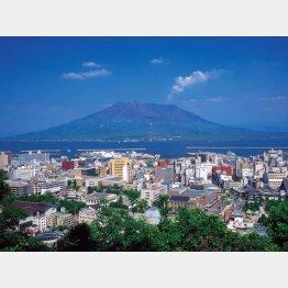 城山より鹿児島市街と桜島を望む(C)日刊ゲンダイ