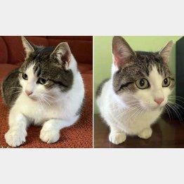 ゲオルギーさんがモスクワ・タイムズの広告欄に出した猫(フェイスブックから)