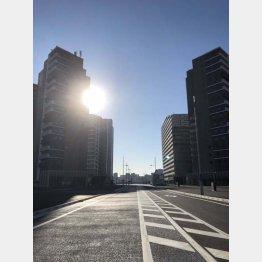 コンクリートジャングル(C)日刊ゲンダイ
