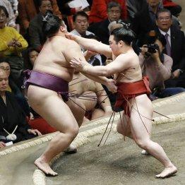炎鵬、照強、宇良…いまや大相撲は小兵なしでは語れない
