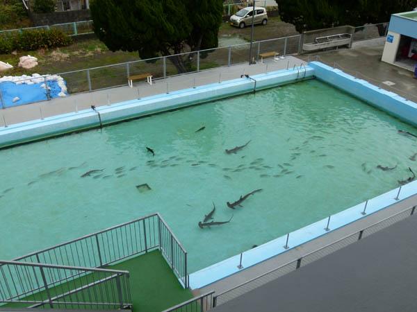 プールにサメ!(C)日刊ゲンダイ