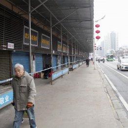 感染源とされる「武漢卸売市場」に古手川祐子似美魔女の影