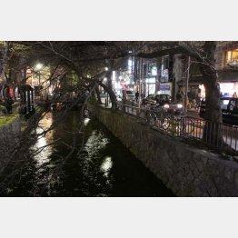 京都の木屋町通り(C)日刊ゲンダイ