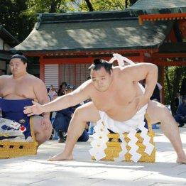 38年ぶりの横綱大関 最高位を兼務する大関鶴竜は大変だあ