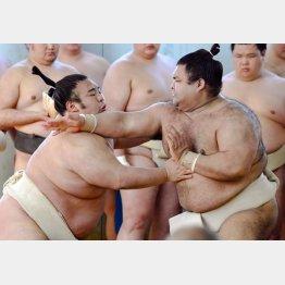 稽古する貴景勝(左)と高安(C)共同通信社