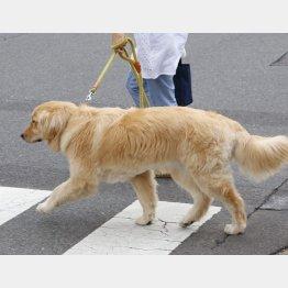 人から犬に感染(C)日刊ゲンダイ