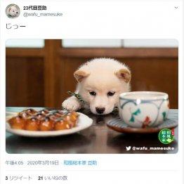 (23代目豆助のツイッターから)