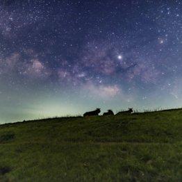牧草地に寝転んで見た映画のスクリーンのような満天の星