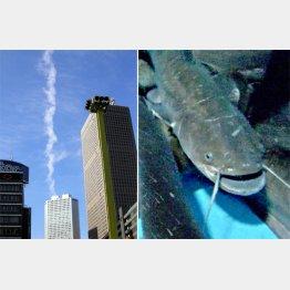地震予知の研究が進められている(C)日刊ゲンダイ