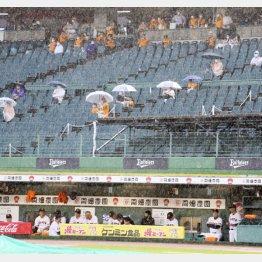 大雨の中、試合開始を待つ巨人ベンチ(右から2番目が原監督)と観客(C)日刊ゲンダイ