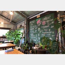 店内は緑が豊富でゆったりと(C)日刊ゲンダイ