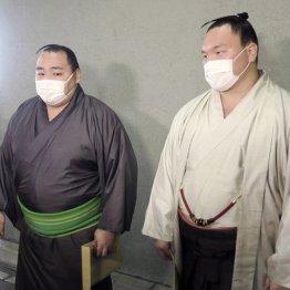 照ノ富士Vの裏で…白鵬と鶴竜の休場癖に武蔵川親方も苦言
