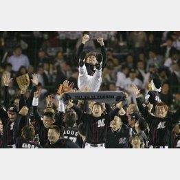 2005年、日本一を達成し、バレンタイン監督を胴上げするナイン(C)日刊ゲンダイ