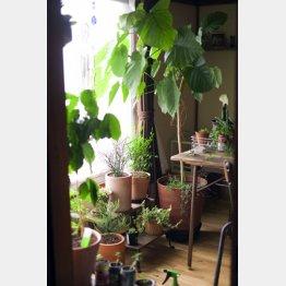 観葉植物の受け皿にたまった水も要注意