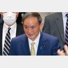 政治の道に入りたいだけだった(菅首相)/(C)日刊ゲンダイ