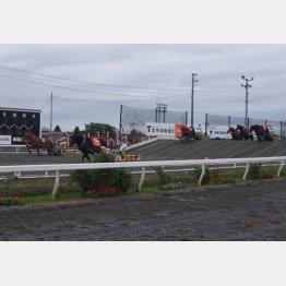 ばんえい競馬(提供写真)