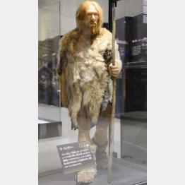 ネアンデルタール人の復元模型(東京・上野の国立科学博物館)/(C)共同通信社