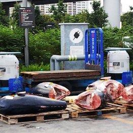 豊洲市場でギョ!野ざらしマグロを生んだ致命的な設計ミス
