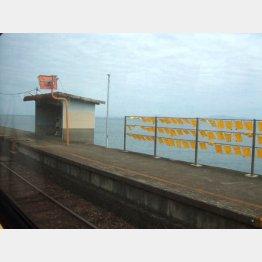 黄色いハンカチの揺れる島原鉄道の大三東駅(C)日刊ゲンダイ