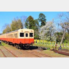 のんびり巡りたい(小湊鉄道)