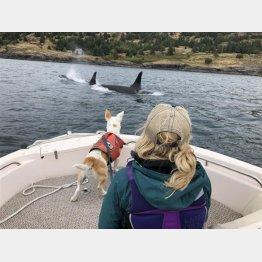 シャチを見つけたデボラさんと愛犬エバ(デボラさんが作成したエバのインスタグラムから)