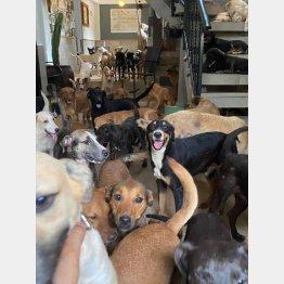 ハリケーン・デルタを生き延びた犬たち(リカルドさんのフェイスブックから)