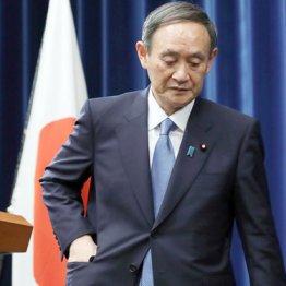 """解散""""秋""""は本音?菅首相「言い間違え」が与野党に臆測呼ぶ"""