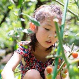 農薬多いのはホウレンソウ、トマト、レタス…子供は有機を
