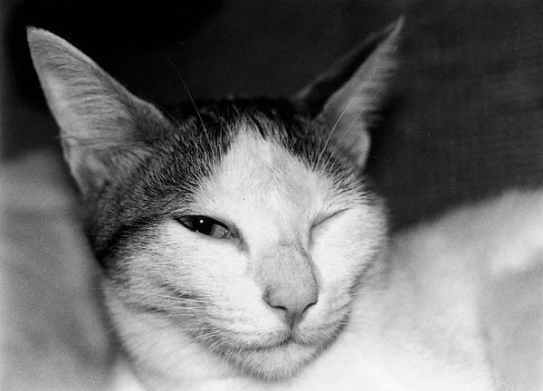 チロ(1988年撮影)/(提供写真)