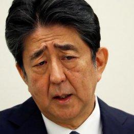 """桜疑惑で安倍前首相に致命的弱点 """"虚偽答弁""""を見過ごすな"""