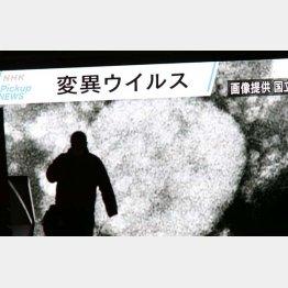 変異種の感染力は70%増!(静岡の変異種確認を伝える東京・秋葉原の大型ビジョン)/(C)日刊ゲンダイ
