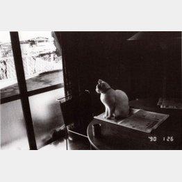 チロ「センチメンタルな旅・冬の旅」から(1990年撮影)