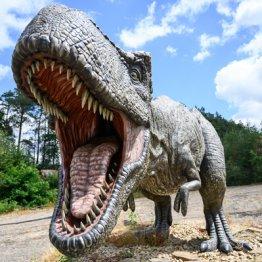 恐竜Tレックスはどうやってセックスしていたのか?