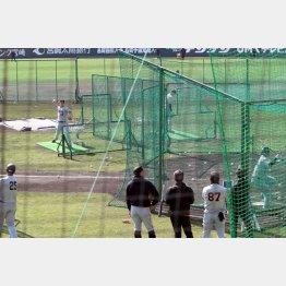 打撃投手が数メートル前から投げる巨人の打撃練習(C)日刊ゲンダイ
