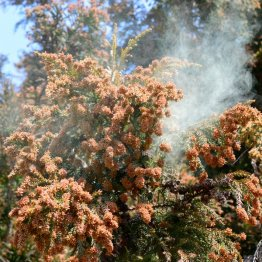 花粉症から解放される日は訪れるのか(C)kororokerokero/iStock